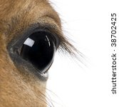 Close Up Of Foal's Eye  4 Week...