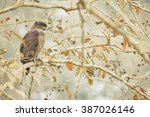 crested serpent eagle in... | Shutterstock . vector #387026146