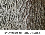 Background Texture Of Tree Bar...