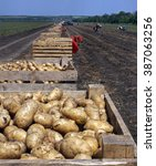 Small photo of harvesting potatoes on an agricultural field