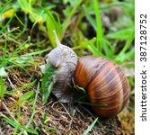 Snail Eating Grass