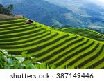 Rice Fields On Terraced In...