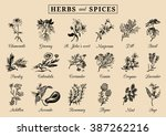 herbs and spices set. hand... | Shutterstock .eps vector #387262216