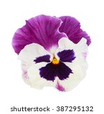 Pansy  Spring Flower Isolated...