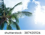 palm trees against blue sky | Shutterstock . vector #387420526