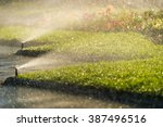 lawn sprinkler spraying water | Shutterstock . vector #387496516