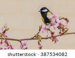parus monticolus | Shutterstock . vector #387534082