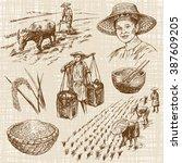 hand drawn illustration  rice... | Shutterstock .eps vector #387609205