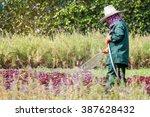 gardener watering | Shutterstock . vector #387628432