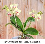 Yellow Orchids Flowers With Re...