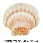 Isolated Sea Shell On White...