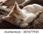 Stock photo little cat sleeping 387677935