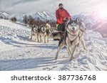 Sled Dog Racing Alaskan...
