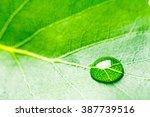 Water Drop On Leaf. Studio...