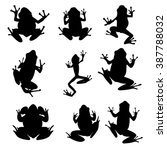 Vector Amphibian Silhouette On...