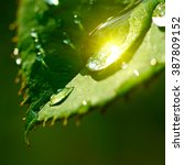 drop of water with reflected... | Shutterstock . vector #387809152