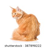 maine coon cat sitting with his ... | Shutterstock . vector #387898222