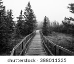Wooden Path In Peat Bog