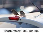 Two Sparrows Sitting On The...
