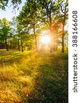 sunset in forest trees. natural ... | Shutterstock . vector #388166608