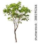 tree isolated on white... | Shutterstock . vector #388190266
