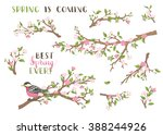 vector set of spring branches... | Shutterstock .eps vector #388244926