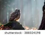 Stock photo eurasian eagle owl bubo bubo sitting on the stump wildlife photo 388324198
