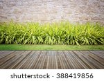 Wooden Decking And Plant With...