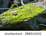Selective Focus Of A Clump Of...