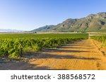 dirt road through rural... | Shutterstock . vector #388568572