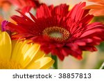 Red and yellow herbera bouquet - stock photo