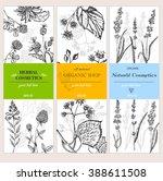 vector vintage template label... | Shutterstock .eps vector #388611508