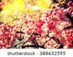 spring flowers   Shutterstock . vector #388632595