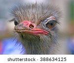 head ostrich on a blurred... | Shutterstock . vector #388634125