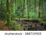 small stream in a green... | Shutterstock . vector #388719505