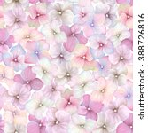 Inflorescence Hydrangea...
