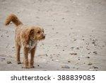 Windswept Dog At Beach