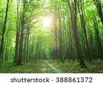 sunlight in the green forest ... | Shutterstock . vector #388861372