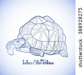 Graphic Indian star tortoise drawn in line art style in blue colors. Geochelone elegans. Rare turtle pet.  Coloring book page design