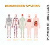 human body systems | Shutterstock .eps vector #388966306