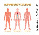 human body systems | Shutterstock .eps vector #388966312