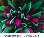 beautiful tulip flowers  | Shutterstock . vector #389012575