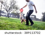 Stock photo a border collie dog playing with its owner on a frisk morning in the park 389113702