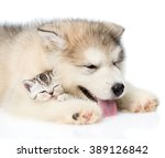Stock photo puppy sleeping with kitten isolated on white background 389126842