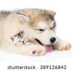 Puppy Sleeping With Kitten....