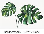 watercolor painting of monstera | Shutterstock . vector #389128522