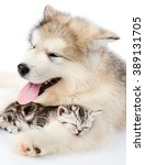 Stock photo puppy embracing sleeping kitten isolated on white background 389131705