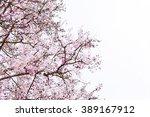 lagerstroemia floribunda jack... | Shutterstock . vector #389167912