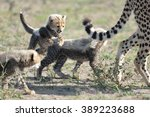 cheetah with cubs | Shutterstock . vector #389223688