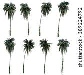3d rendering of coconut trees | Shutterstock . vector #389224792